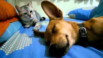 Als hond net in diepe slaap is...