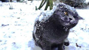 Katten in de sneeuw