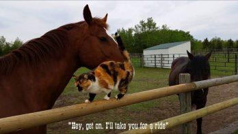 Paard laat kat meeliften