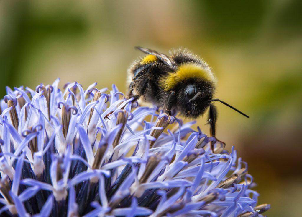 help dieren in tuin: de bijen