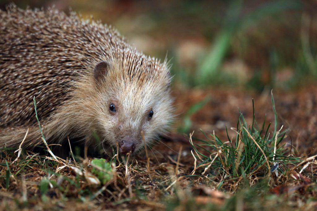 Help dieren met tuin: egels