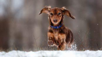 Hond in de winter: tips bij sneeuw, ijs en vrieskou