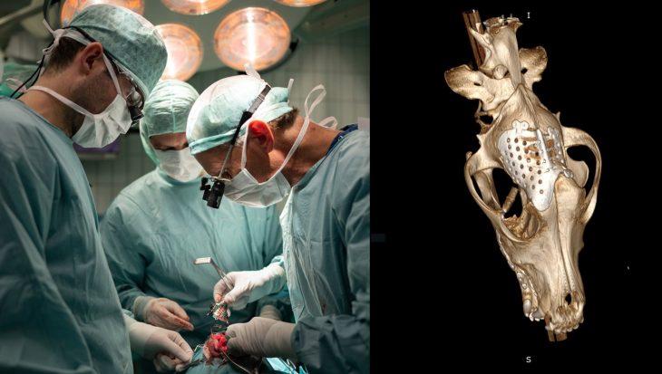 Hond krijgt nieuw 3D-geprint schedeldak