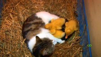 Een kat besloot de kleintjes niet op te eten