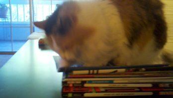 Kat is tot over zijn oren verliefd op magazines