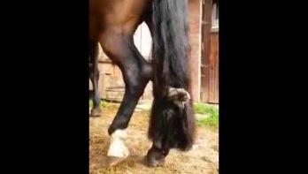 Kat klimt lekker in paardenstaart