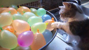 Katten en ballonnen...