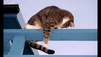 Kattenstaart blijft fascinerend