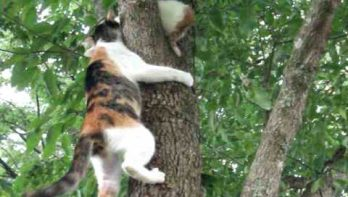 Mamapoes schiet kitten te hulp