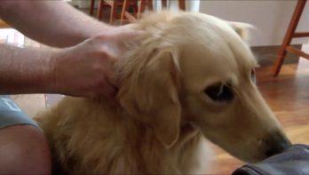 Hond krijgt geen genoeg van nekmassage
