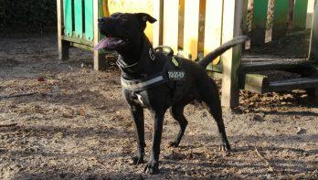 Hond Roxy zit boordevol energie en zoekt een thuis