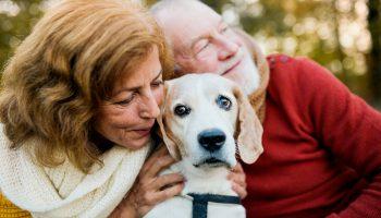 Dementie bij een hond