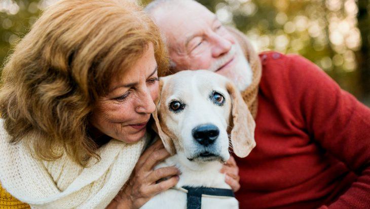 Dementie bij een hond: herkenning en behandeling