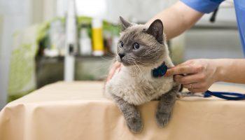 vaccinaties kat