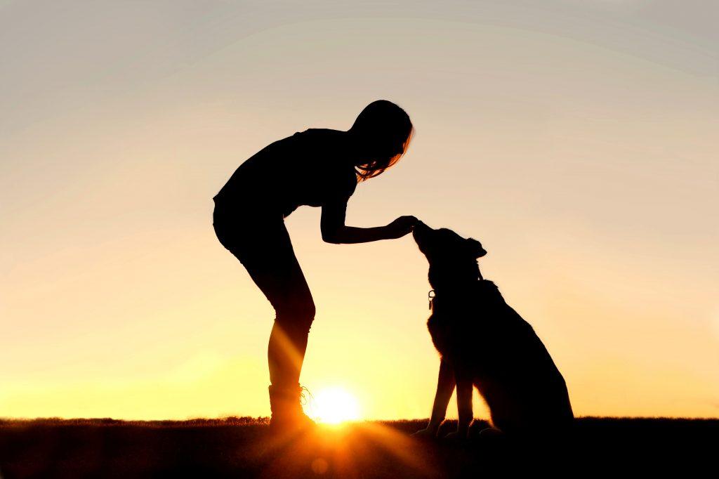 Dementie bij een hond 3