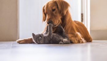 Populairste hondennamen en kattennamen