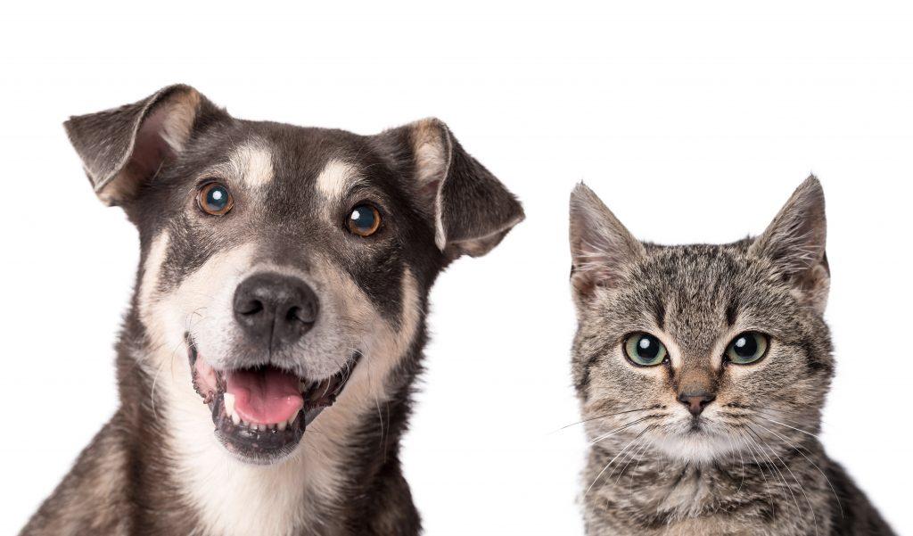 Hondennamen en kattennamen: bijzonder