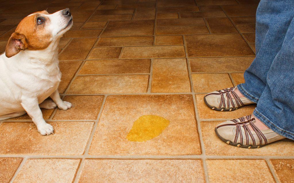 dementie bij een hond 4
