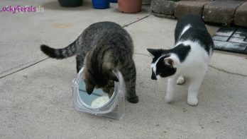 Spelende katten die zich soms verwonderen