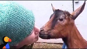 Superlieve opvang voor geiten