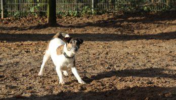 Hond Moby zoekt een nieuw thuis