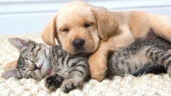 Deze honden en katten slapen samen het beste