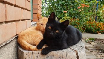 Katten-soap: het goede kattenleven