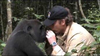 Na 5 jaar ziet Gorilla de verzorger die hem vrij liet...