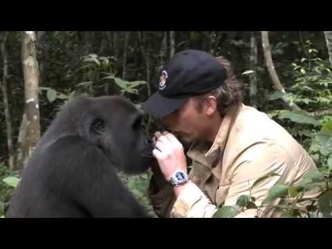 Na 5 jaar ziet Gorilla de verzorger die hem vrij liet…