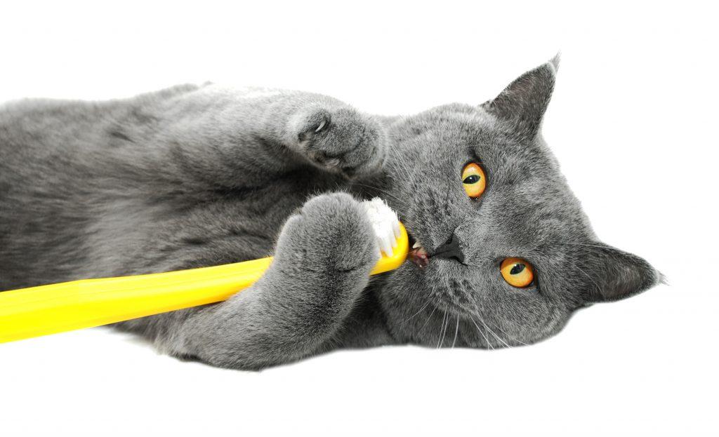 tanden van een kat 2