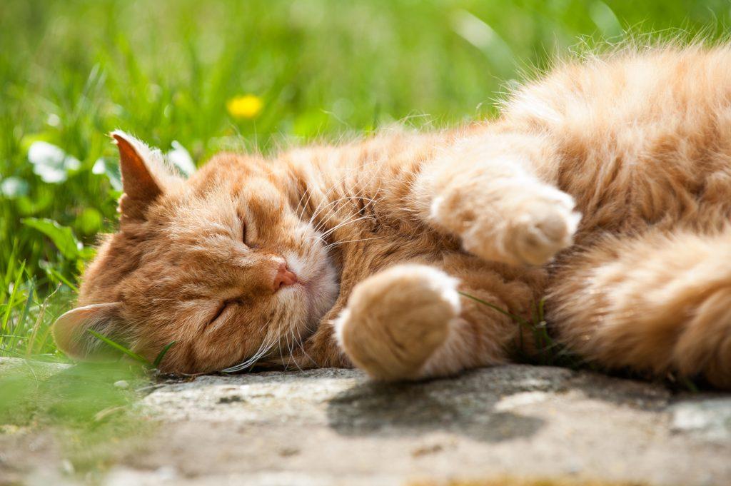 vacht van een kat senior