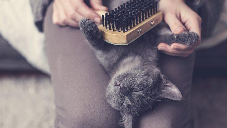 Zo verzorg je de vacht van een kat