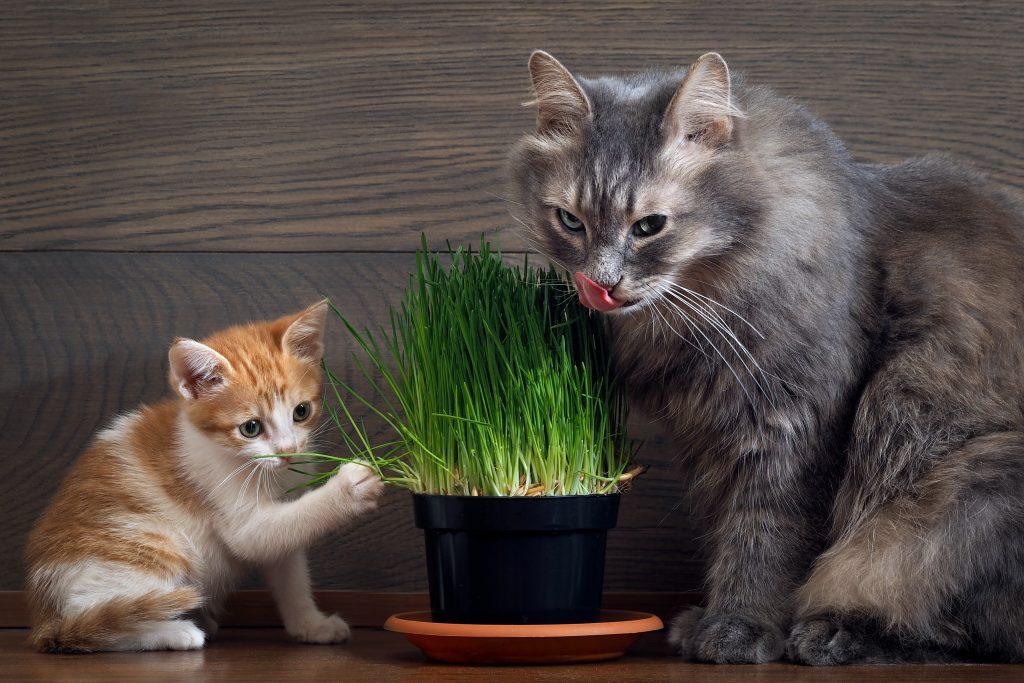 Verharen katten gras
