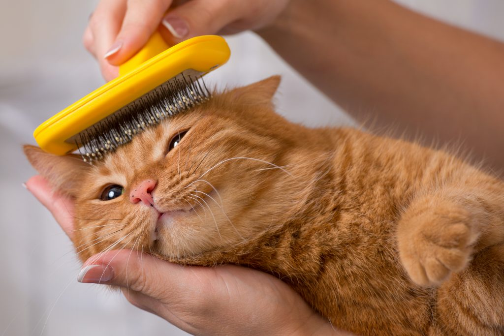 verharen katten borstelen