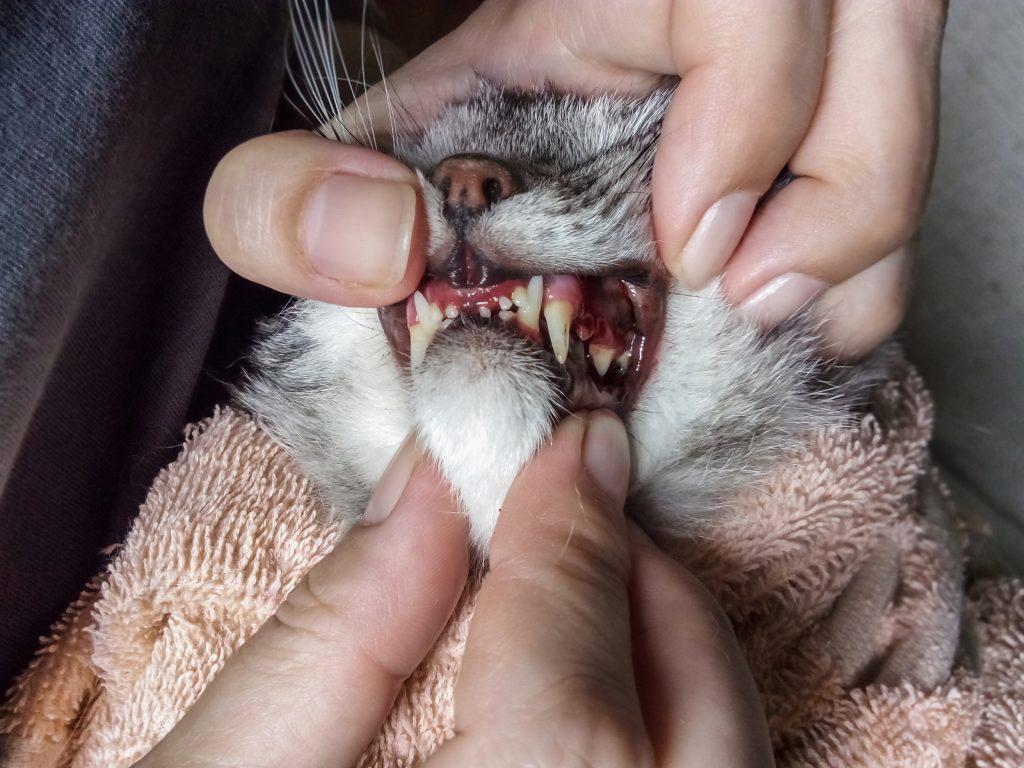 problemen kattengebit