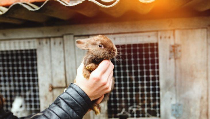 Petitie tegen doden pasgeboren konijntjes vanwege vachtkleur