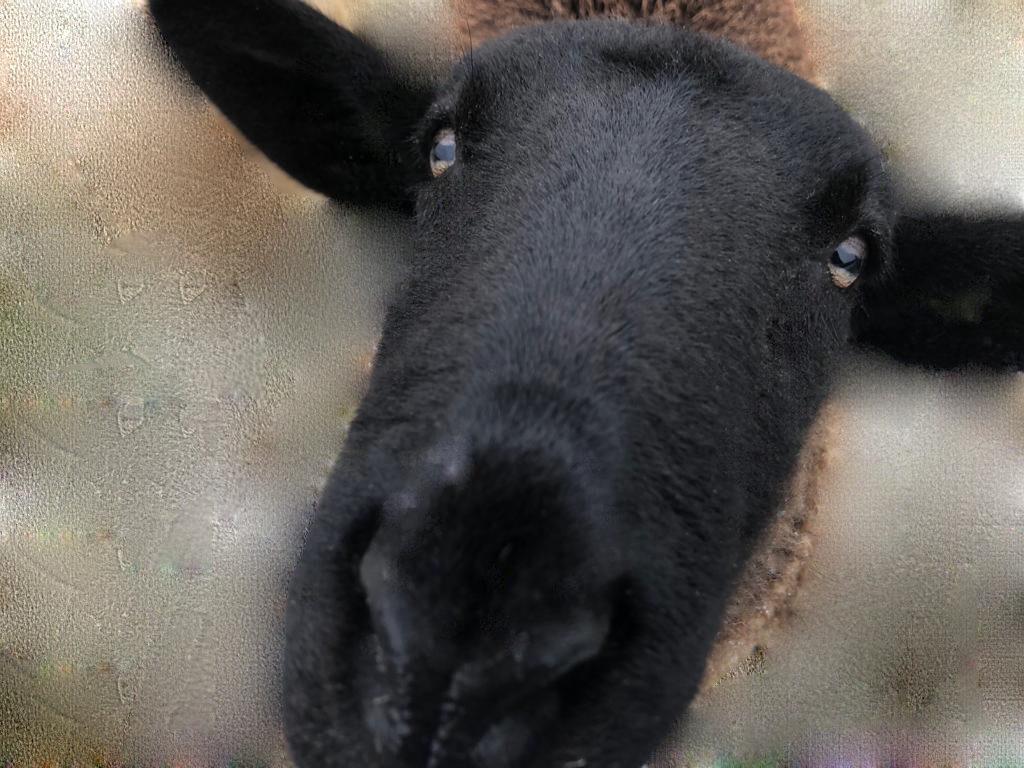 selfies van dieren 7