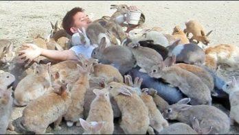 Bedolven onder de konijnen