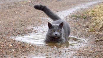 Dagje wellness voor kat