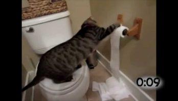 Deze katten gaan de strijd aan