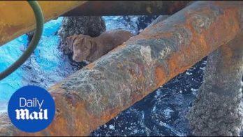 Hond uit zee gered, ruim 200 km van de Thaise kust