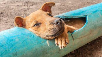 Hondje wordt uit plastic pijp gered