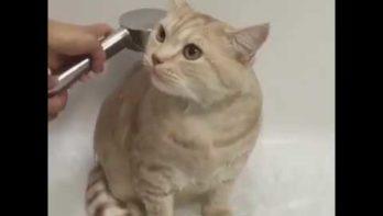 Kat is gek op douchen!