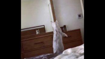 Kat ontdekt dat hij oren heeft...