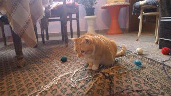 Kat vindt bolletjes wol verbazingwekkend!
