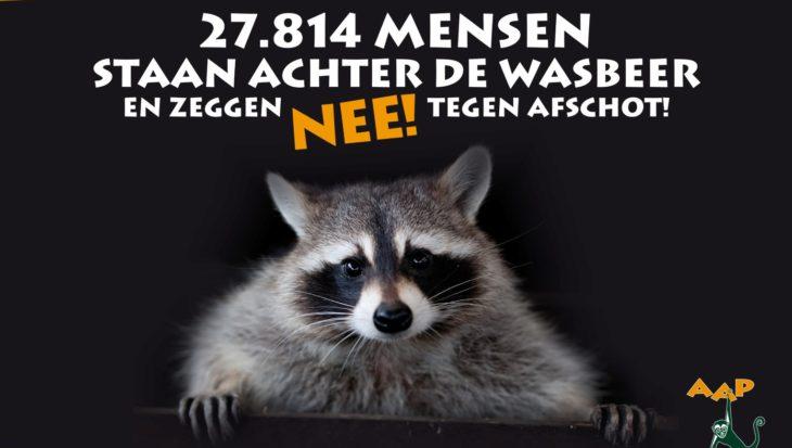 Wasbeer provincie Limburg wordt opgevangen