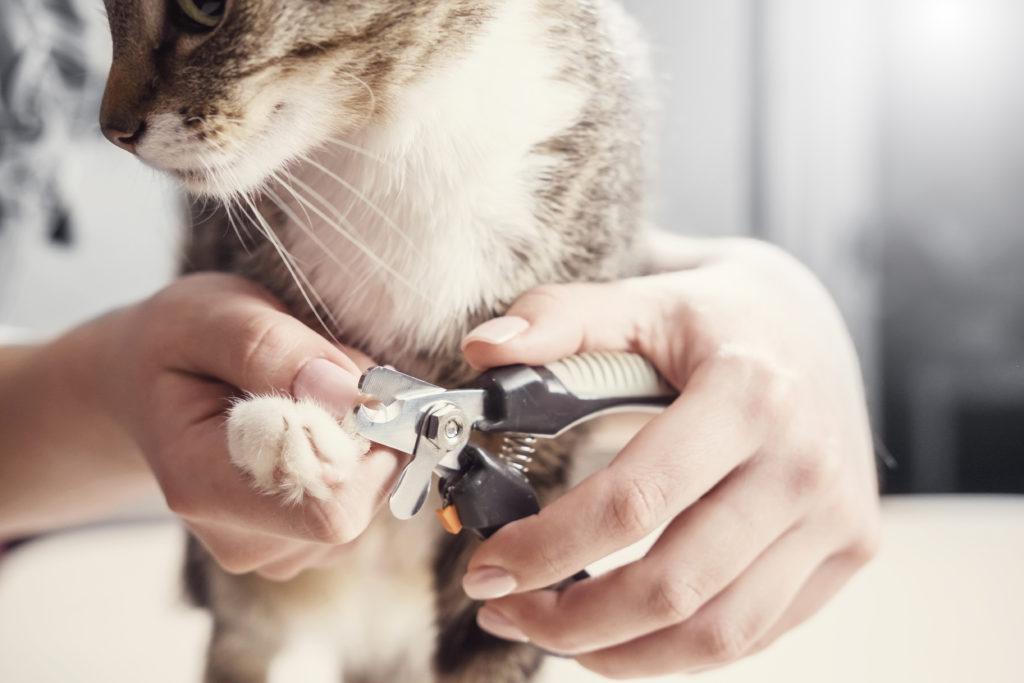 nagels knippen bij een kat