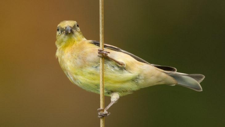 Hoe moet je een vogel oppakken?