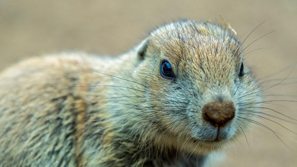 selfies van dieren 8