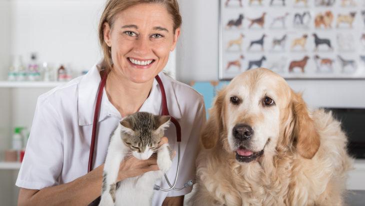 Bang voor de dierenarts: tips en checklist